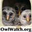 Barred Owls Nesting - OwlWatch