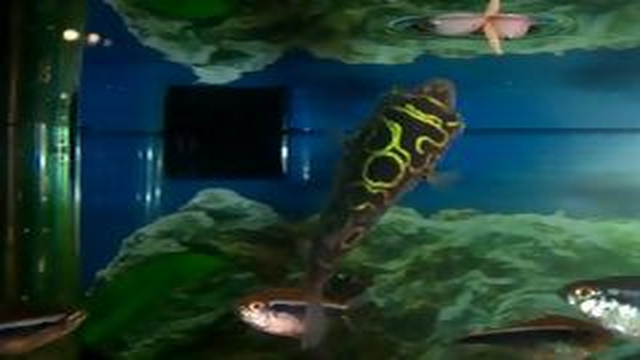 Live fish cam on ustream a live view of my 90 gallon for Fish tank camera