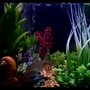 Andy's Tropical Aquarium (Acoopr)