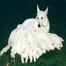See live White German Shepherd puppies-- Baby Pola