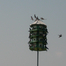 Purple Martin Nestcam by Randall Rash