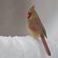 Tweety Bird Cam