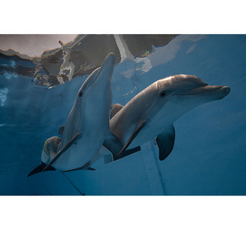 Save winter the dolphin webcam