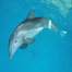 Winter the Dolphin Webcam