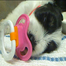 NEW CHAT on www.LivePuppyCam.com