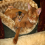 Abyssinian Kitten Cam 10/24/11 03:16PM