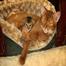 Abyssinian Kitten Cam 10/25/11 08:18AM