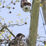 Duke Farms Eagle Camera