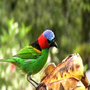 Birds from brazilian Atlantic Forest