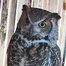 Great Horned Owl Breeding Project