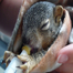 Full Feed: Squirrels, Chipmunks, Skunks, Opossums