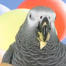 At 5:20, Bibi is transformed into the rare African Gray Carrot.