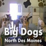 Des Moines Doggycam #1