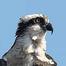 FortisBC - Osprey Nest