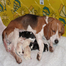 Jewels and Coolio&#039;s pups born 4/30/13