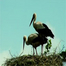 stork-nest-lithuania
