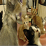 Delray Kitten Cam - Feeding Time 2