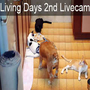 living days livecam2