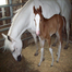 Baby Horse Monitor