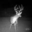 Georgia Live Deer Camera
