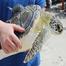 National Aquarium Marine Animal Rescue Program