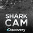 Shark Week's Shark Cam