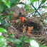 Cute segment of the 2 resting cardinals