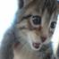 Wayside Waifs Kitty Cam
