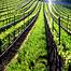 Standing Sun Wines