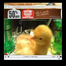 mountain dew baby chicks live
