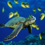 STES Sea Turtle Channel