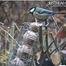 Feeding birds in DK garden