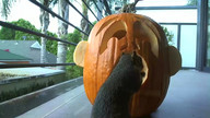 A very squirrely Halloween