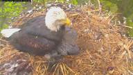 MNBound.com solar powered Eagle Cam