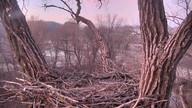 Decorah Eagles