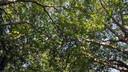 Ageless Gardens: Healing Power of Trees
