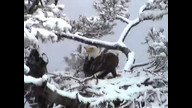 BRIeaglecam: March 23, 2011_1458