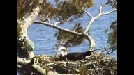 BRIeaglecam: March 24, 2011_1336