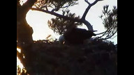 BRIeaglecam1: March 25, 2011
