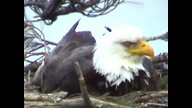 BRIeaglecam: March 25, 2011_1804