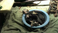Bowl of possum babies