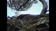 Nextera Eaglecam: April 5, 2011