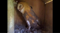 The Owl Box 08/24/11 03:47PM