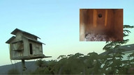 The Owl Box 08/25/11 06:47AM