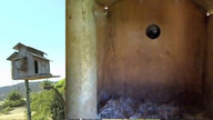 The Owl Box 08/25/11 02:55PM