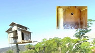 The Owl Box 08/28/11 11:45AM