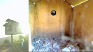 The Owl Box 08/28/11 07:45PM