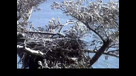Nextera Maine Eaglecam1: 1_20_12