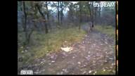 Buck on trail