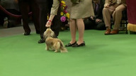 WKC Live Stream 2 - Hound Group February 13, 2012 8:31 PM